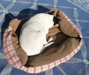 Bridget snoozing in the doggie bed