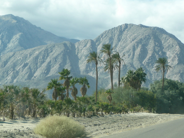 Palm trees against the mountains, Borrego Springs, CA