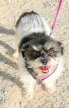 Patty's dog, Bella
