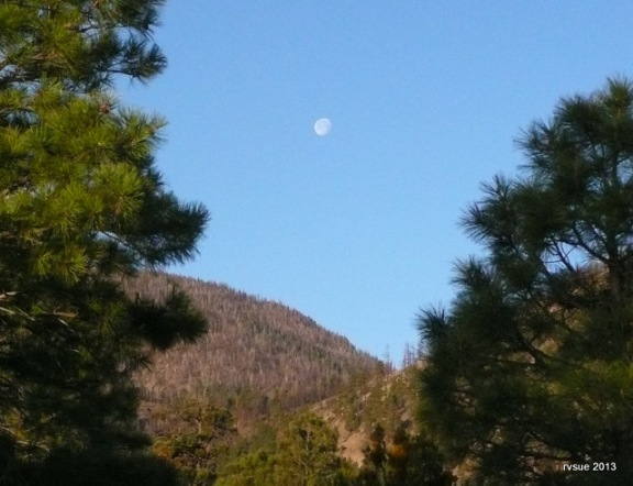 Moon above the pines