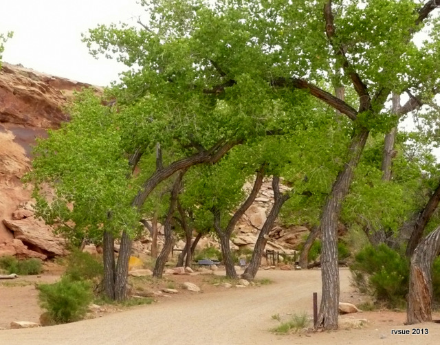 Tent sites in a cottonwood grove.